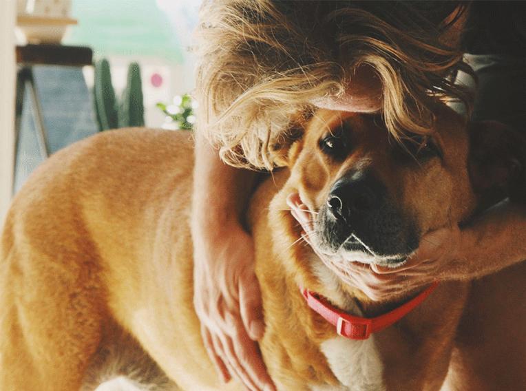 DoggyLottery Story