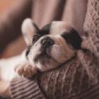 DoggyLottery Safety Corona Virus-min
