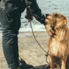 Dog Care_Blog article-min