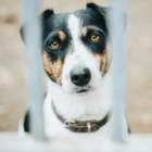 DoggyLottery_Why-Do-People-Abandon-Dogs_new