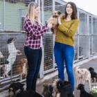 TheImportanceofRescueCentres_Blog article_DoggyLottery-min