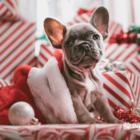 10 ways to get your dog through christmas_blog_new-min