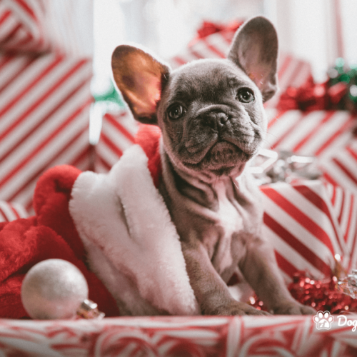 10 ways to get your dog through christmas_blog_new-min
