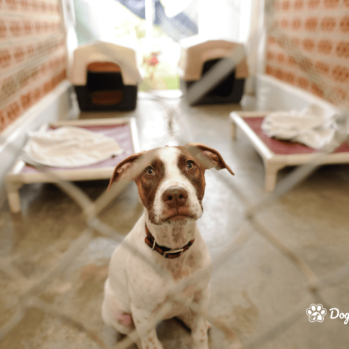 Blog article pic_how to support dog rescue centres-min