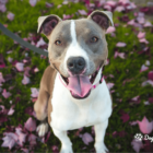 How To Choose The Right Dog For You_blog-min