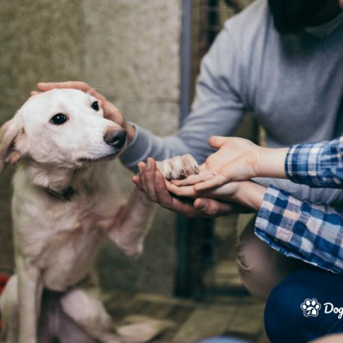 Adopt Don't Shop Why Adopt a Rescue Dog_Blog_DoggyLottery_main-min