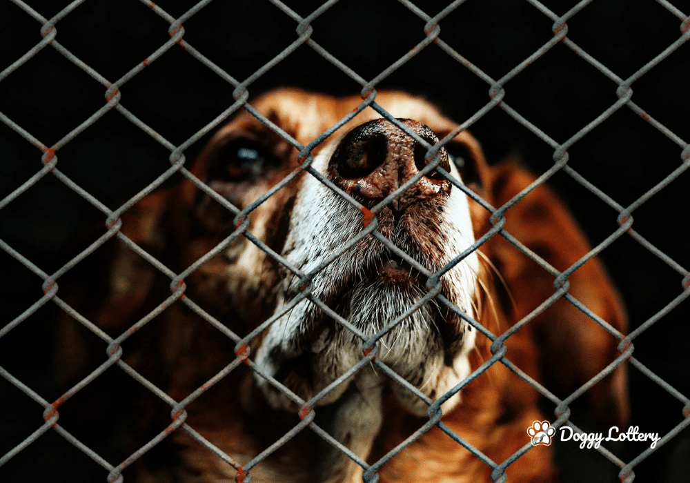 What you need to know about Dog Theft_blog_website_DoggyLottery_n