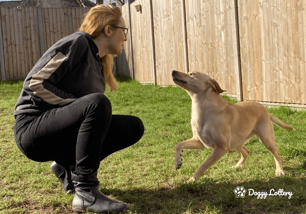 Common Behavioural Challenges with Rescue Dogs_Blog article_DoggyLottery-min