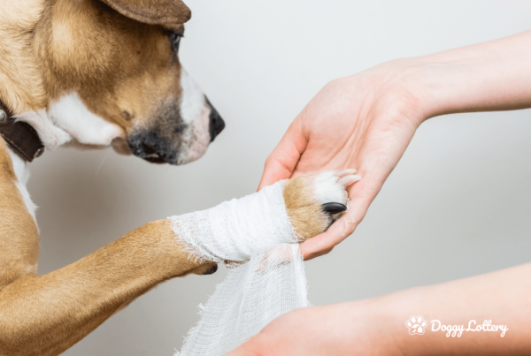 Why should you complete a Dog First Aid course_blog