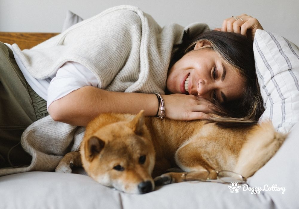 DoggyLottery_8 Health Benefits of owning a dog_blog picn