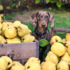 A guide to dog safe human food_blog pic-min