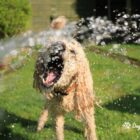 How to keep your dog cool in summer_DoggyLottery_blog pic