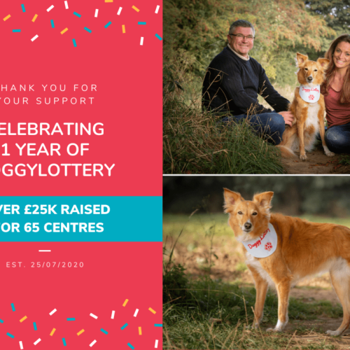 One year anniversary DoggyLottery