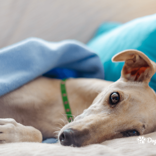 Is your rescue dog in pain?