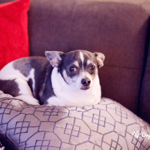 Is your dog obese - blog pic