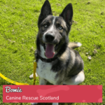 Round 16_DoggyLottery_Canine Rescue Scotland_Bowie_playpage-min