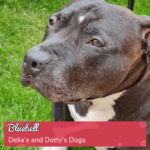 Round 16_DoggyLottery_Delia's and Dotty's Dogs_Bluebell_playpage-min