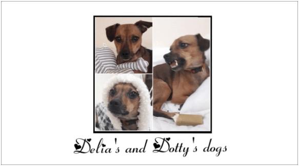 Round 16_DoggyLottery_Delia's and Dotty's Dogs_logo_s-min