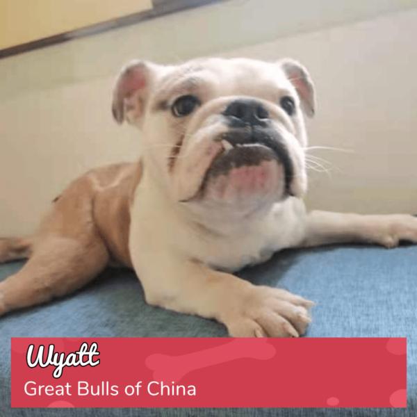 Round 16_DoggyLottery_Great Bulls of China_Wyatt_playpage-min
