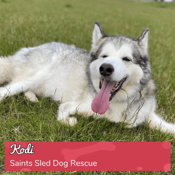 Round 16_DoggyLottery_Saints Sled Dog Rescue_Kodi_playpage-min